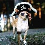 BA_Pirate
